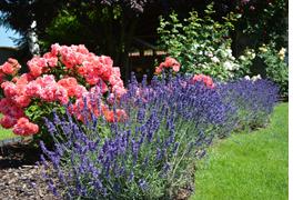 mein(Klein-)Garten